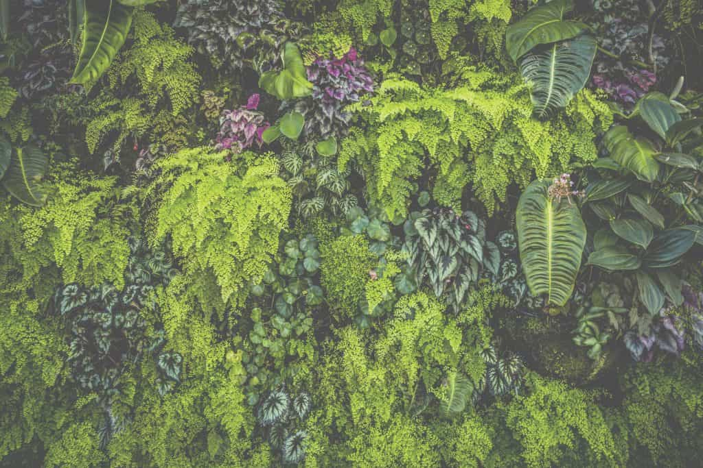 living plant wall with ferns and succulents